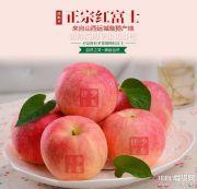 正宗红富士苹果网店货源一件代发果园直发顺丰包邮